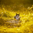Cat on a green meadow. — Stock Photo #31351567