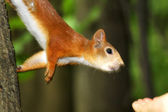 Protein reaches for the hand of a nut — Stok fotoğraf