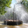 Fountain in Peterhof sun — Stock Photo