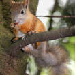 Stock Photo: Squirrel on tree