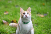 Beautiful white - cat playing in the green grass — Stock Photo
