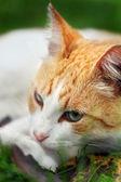 美しい白 - 緑の草の赤い猫夢 — ストック写真