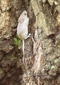 Gray wood mouse on a tree in the forest. — Foto Stock