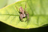 A small brown spider — Stock Photo