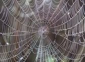 Spider web with drops — Stock Photo