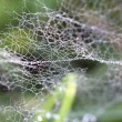 Drops of dew on  spider web in the grass — Stock Photo