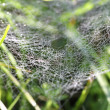 Drops rosy na wide web in the grass — Stock Photo