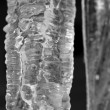 Stock Photo: Icicle closeup