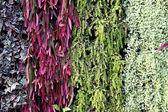 Texture of plants — Stock Photo
