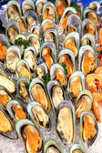 Mussels in shells — Stock Photo