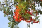 Träd i djungeln — Stockfoto