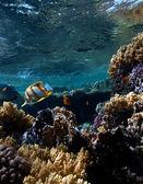 Panorama sott'acqua — Foto Stock