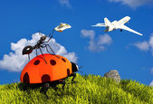 Insects. — Stock Photo