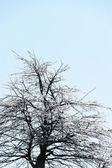 Icy tree branches — Foto de Stock