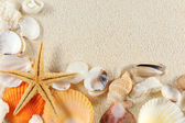 Seashells group — Stock Photo