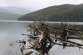Fallen dead tree in the lake — Stock Photo