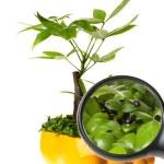 Pot plant — Stock Photo