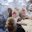 Japanese Snow Monkey — Stock Photo