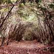 Stock Photo: Forest of Aokigahara