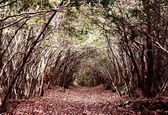 Forest of Aokigahara — Stock Photo