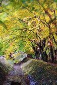 Maple Leaf Tunnel — Stock Photo