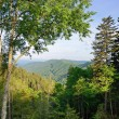 Stock Photo: Smoky Mountains