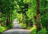 Country lane — Stockfoto