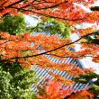 Fall Foliage of Japan — Foto Stock