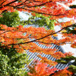 Fall Foliage of Japan — Zdjęcie stockowe