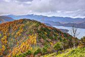 Nikko national forest i japan — Stockfoto