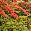 Japanese Style Gardens — Stock Photo