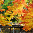 Fall Foliage in Nagoya, Japan — Stock Photo