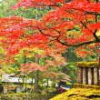 Постер, плакат: Foliage in Nikko