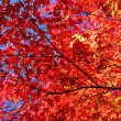Fall Foliage — Stock Photo #29400571