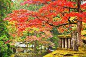 Feuillage dans nikko — Photo