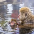 Stock Photo: Snow Monkey Park