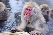 Snow Monkey Park — Stockfoto