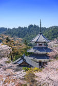 Yoshinoyama, Japan at Kinpusenji Pagoda — Stock Photo