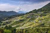 Rice Terraces — Stock Photo
