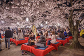 Cherry Blossom Festival — Stock Photo