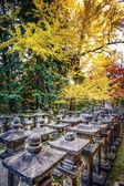 Queda de folhagem em nara, japão — Foto Stock