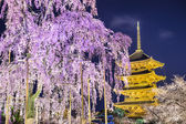 To-ji Pagoda in the Spring — Stock Photo