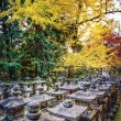 Постер, плакат: Fall Foliage in Nara Japan