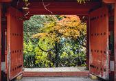 秋天树叶在奈良日本 — 图库照片