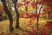 Sonbaharda yapraklar kyoto — Stok fotoğraf