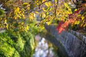 Philosopher's Path in Kyoto, Japan — Стоковое фото