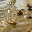 Stock Photo: Washes cockleshells wave ashore sea
