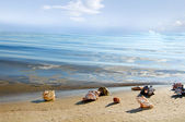 Cockleshells lie ashore sea — Stock Photo