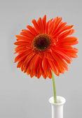 Flower of gerbera is in a vase — Stock Photo