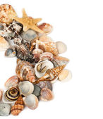 Background from marine cockleshells — Stock Photo